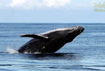 Kauai Sea Life / Check out the amazing and beautiful Kauai Sea Life of Hawaii.