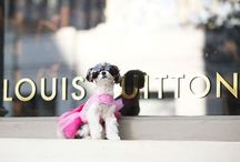 The Most Stylish Dogs