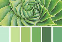 color s harmouny