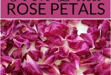 rose gardening + tips/diys