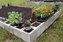 Edible Garden Layout