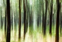 Pano Wood / Interior