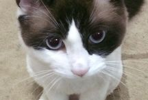 Zulu / O gato mais lindo