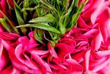 clicks of freshness / flowers of joy
