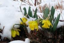 Seventeen Days Till Spring!