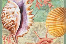 deniz figürleri