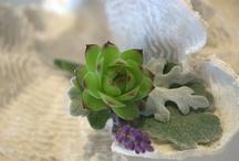 Succulent Boutonniere Collection