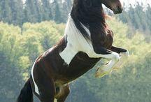 Pferde ❤❤❤❤