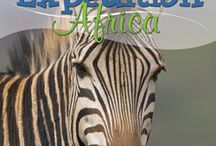 Montessori-Africa / by Robin Allegro