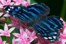 Fotografia - Farfalle