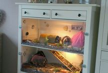 Indoor guinea pig ideas