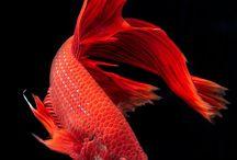 Nature | Underwater Inspirations