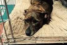 Tess the Shop Dog / The adventures of Tess the Run Geek shop dog
