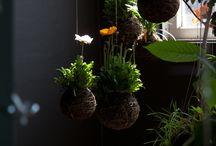 | Flora and Fauna | / by Kadi