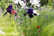 Flowers & Planting