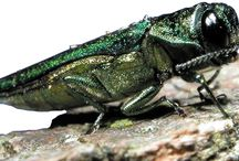 Insects / Disease Info & Prevention / Insects & Disease Info & Prevention