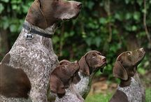 Dogs that I want