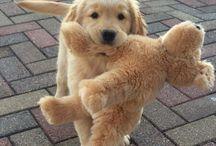 that cutie...