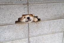 | dog |
