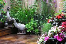 URBAN gardening by Design / Gardening in Manhattan.  Images from a rooftop garden.