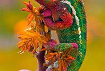 Chameleon bar