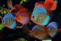 peces y medusas