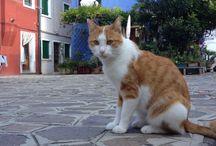 Cats / Piaget dice che l'intelligenza é capacità di adattamento : il gatto è intelligente,molto!