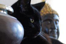 Buddha & pets