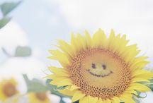 Stunning Smile / by Medicinegirl SilentEvolution