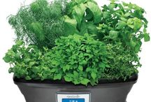 AEROGARDEN / I love Herb Greens and Vegetables / by Sherry Price
