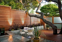 Outdoor space / by clc things