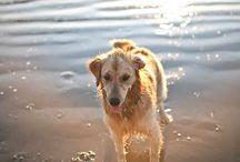 Canine Cuteness / by Pamela Cortez