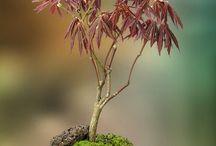 garden-bonsái