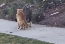Katte / Kat