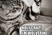 Kitty Humour