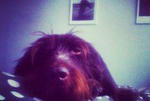 dogy dog / most beloved dog heart