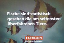 Sprüche / Wie wahr...