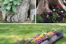 blommor i trädgården