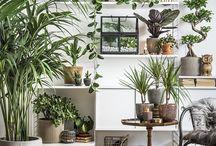 växter inne