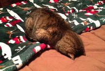 audrees funny animal pics / by Stefanie Burningham