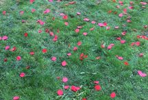 Remembrance Service 2014 / Remembrance service to commemorate the opening of the World War One arboretum area in Cawston Grange Park. We were honoured to be asked to provide a shower of poppy petals.