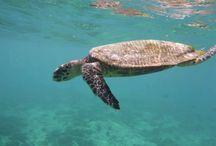 Seychelles / Beautiful paradise❤️
