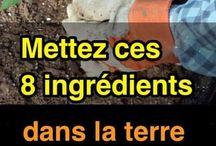 ingredients pour cultiver de belles tomates
