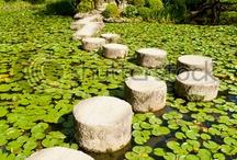 Zen Wellness