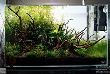 Triangular shape Aquascapes