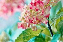 Flowers Dreams*