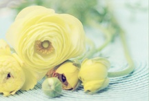 Yellow Wedding / by Minted