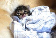 Cat-Cat-Cattidy-Cat