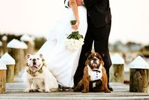 Wedding Pets / Ideas how you can incorporate man and woman's best friend at your wedding...brought to you by www.myfauxdiamond.com