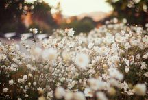 MIDSUMMER | Scent / The inspiration and mood board behind our aromatherapy Midsummer blend of pure essential oils.